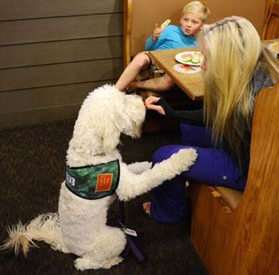 Clover - Moss Creek Therapy Dog