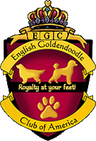 English Goldendoodle Club of America