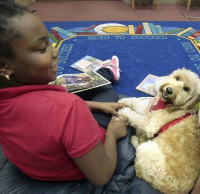 R.E.A.D Therapy Dog Gracie